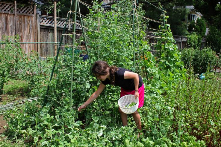 10 Easy Garden Crops (via Survival at Home)